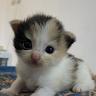 Kirei Shafira
