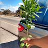 Freitas-Prof