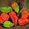 Ancient Pepper