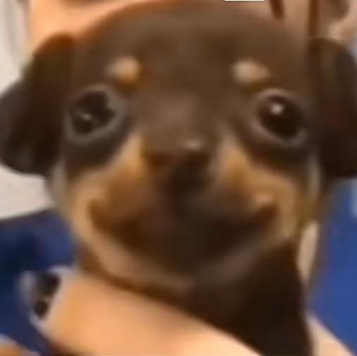 Ranger force69