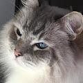 Marcie 's profile image