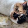 morgan hawke's profile image