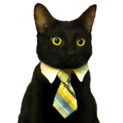 Mr. Business Cat
