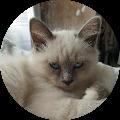 Image du profil de Coco