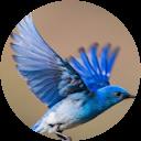 Photo of ABluebird Note ABbN