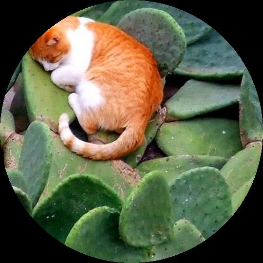 Kitty Mon