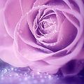 rose lane's profile image