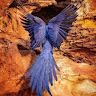 Avatar of vendor : gift igweze