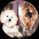 Image Google de Le Boudoir Canin