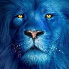 Leo May
