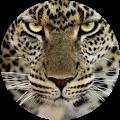Image du profil de Coco du 35
