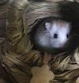Dwarf Hamsters's profile image