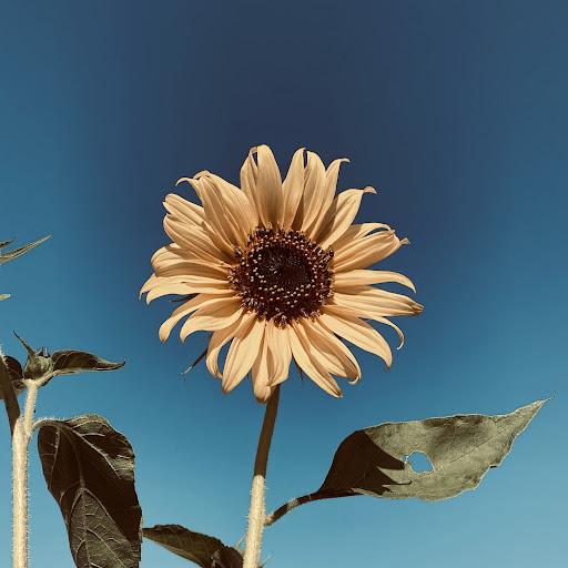 Leo Mbalamana