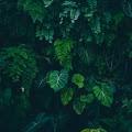 Olivia Dix's profile image