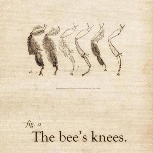 Laurel Van Driest