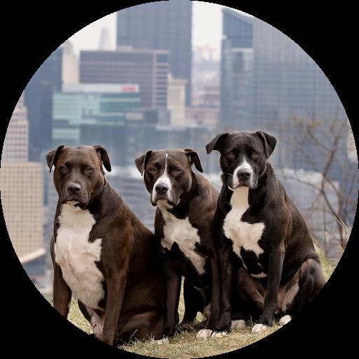 Three Dog Realtor
