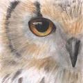 Maegan Carroll's Profile Picture