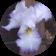 Iris van Leeuwen