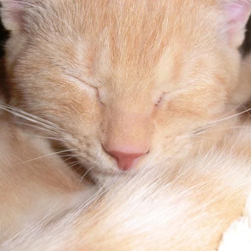 猫 レオン