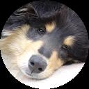 Image Google de Vaiana