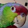 JoEllyn Chapman's profile image