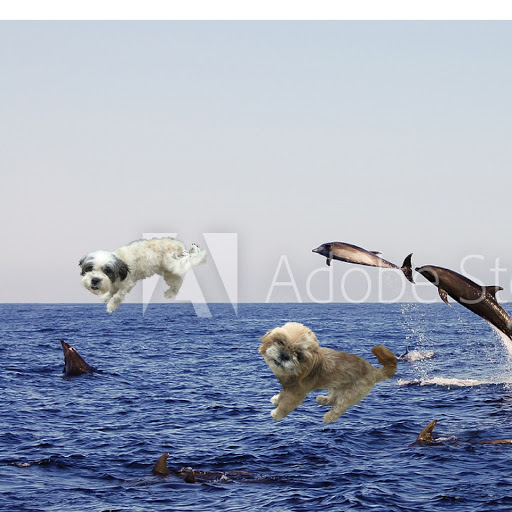 User image: flying whale