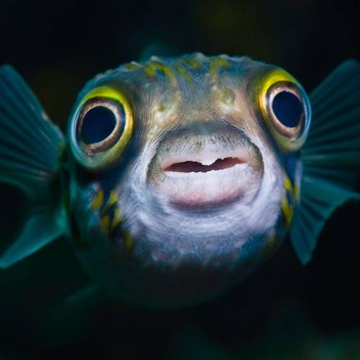 BIG Fish Clarinet Man