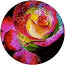 Christy Sunshine