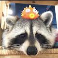 Spade 's profile image