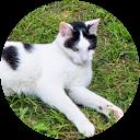 Image Google de royaume des chats