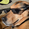 ULTRASOUND DOG