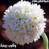 محمد امين الخطاطبه