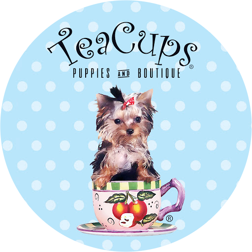 Teacups Puppies