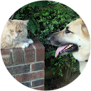 ReHome YourPets