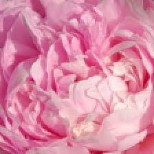 Avatar - Rose BCPA