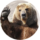 BEARLY_STRONG