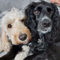 Robyn_C