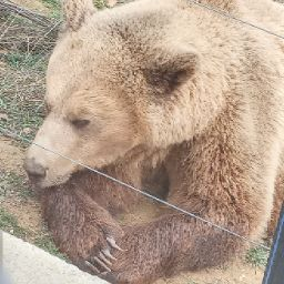 TDG_ExE