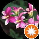 Orchidea X