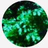 Alyssa Chantay Champagne's profile image