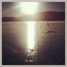 Photo: 017 Gelukkig stak de zon het hele weekend boven het riet uit