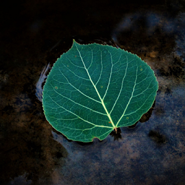 by Rachelle MacDonald - Nature Up Close Leaves & Grasses (  )