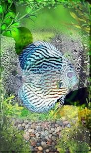 Aquarium Gallery - náhled