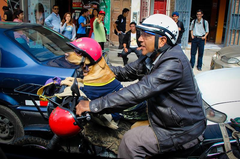 Easy Rider Dog di vlao