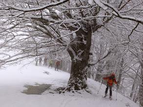 Photo: Patriarca di faggio a sentinella del laghetto