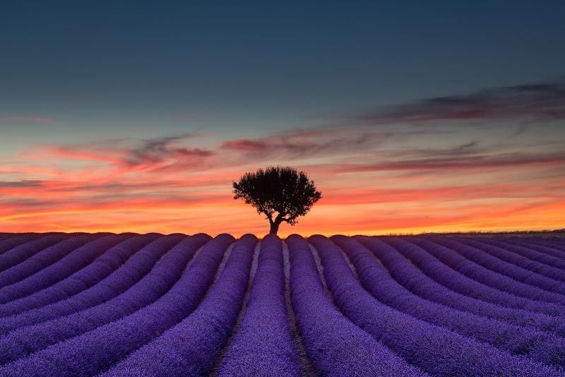 Sunset on violet di Nico Angeli Photography