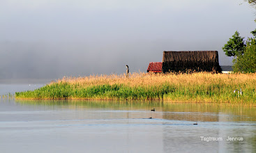 Photo: Tagtraum mit Reiher am See  Hier bin ich Mensch, hier darf ich's sein!  'God's own Country'