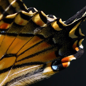 Butterfly Effect by Jon Hurd - Abstract Macro ( butterfly, macro, wing, pattern, nature, insect )