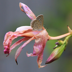 by Ridzwan Mohd Nor - Nature Up Close Gardens & Produce ( butterfly, fauna, flora, gardens, flowers, insects )