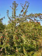 Photo: A for Appletree ABC Photo Project #abcproject   The apples are ripe - come and pick them. =)  also for #treetuesday